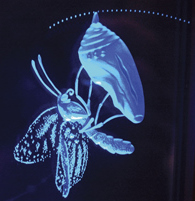 Moth in crysalis only